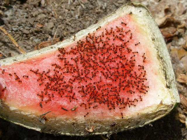 Une colonie de fourmis : qu'est-ce que c'est ?