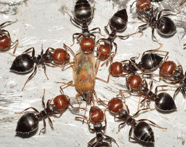 Comment nourrir ses fourmis ?