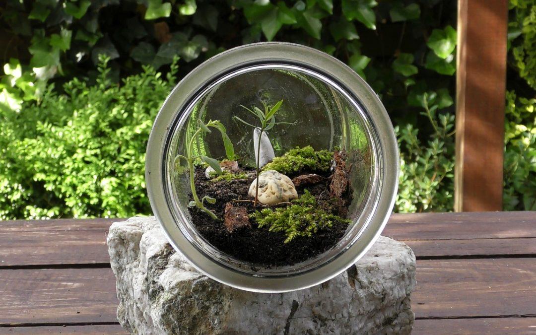 Les terrariums bio-actifs