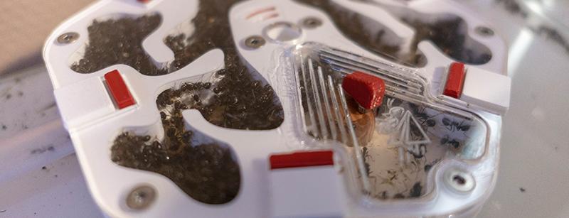 Lancement : Les petites colonies de FourmiCurieuse