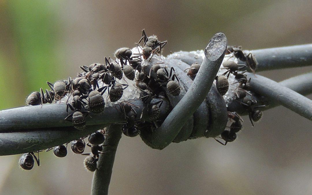 dynamique des fourmis