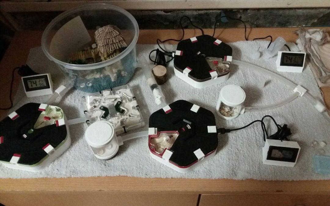 [Suivi de colonie] Les Lasius niger de Sweety Industry's n°1