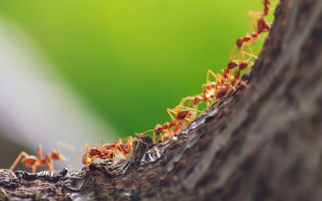 Apprendre la vie sociale en observant les fourmis