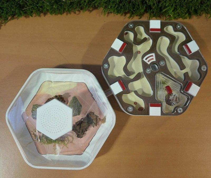Piste d'activité en maternelle : L'habitat des fourmis