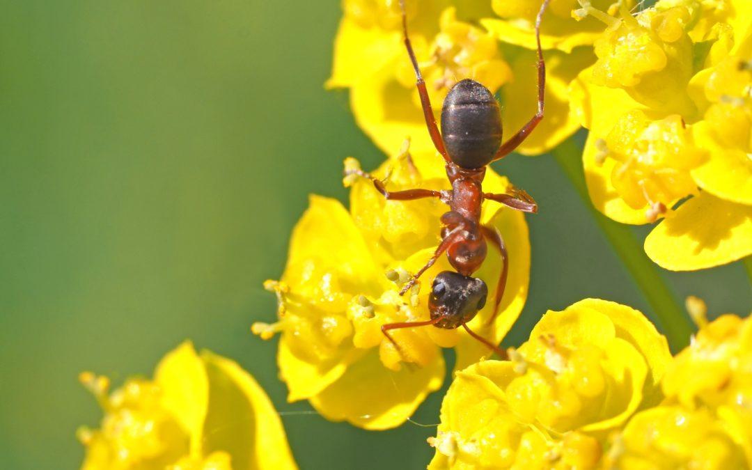Les fourmis et la lumière : que faire ?