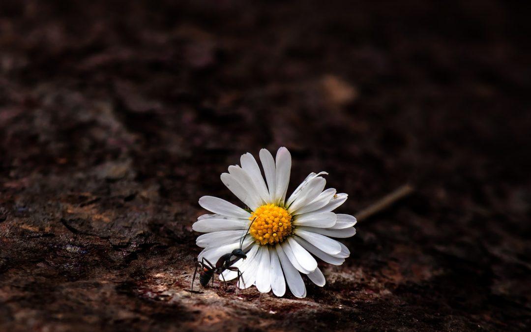 La zoothérapie : pourquoi choisir les fourmis ?