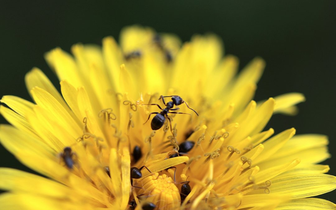 Des fourmis qui pratiquent l'esclavage ?