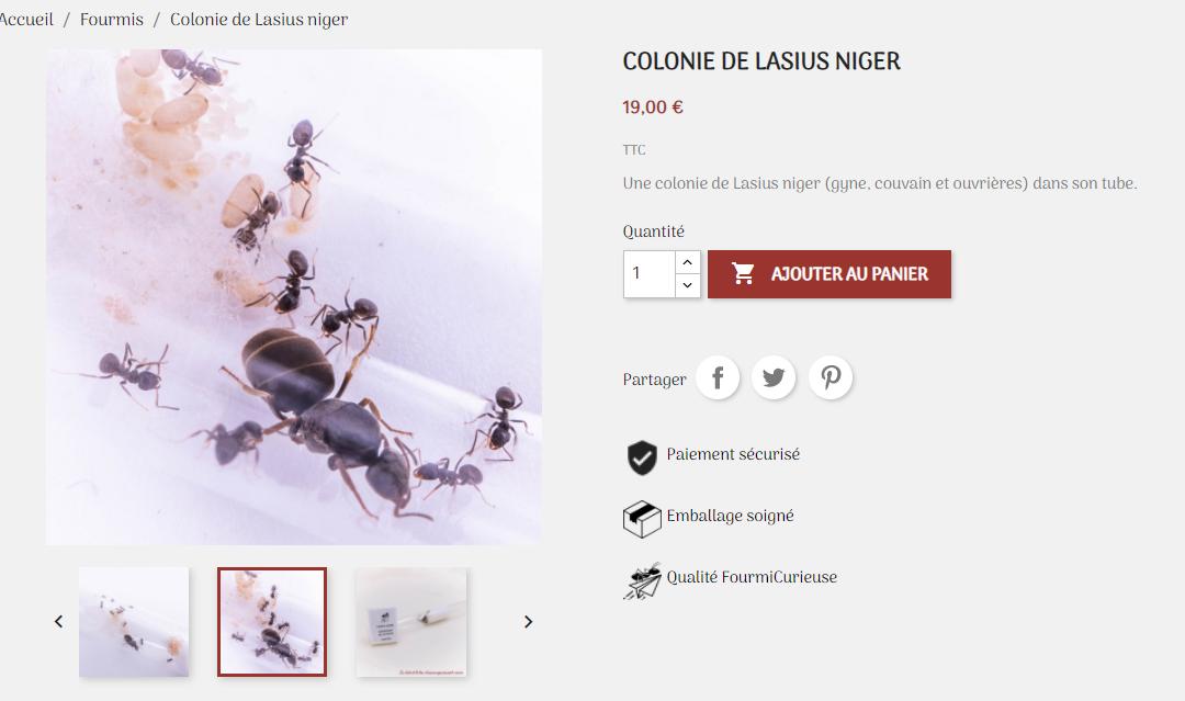 Pourquoi faire de la vente de fourmis ?