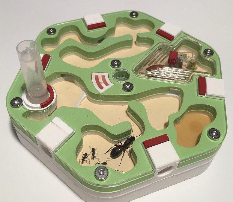 Un nid Alveo fonda pour Camponotus