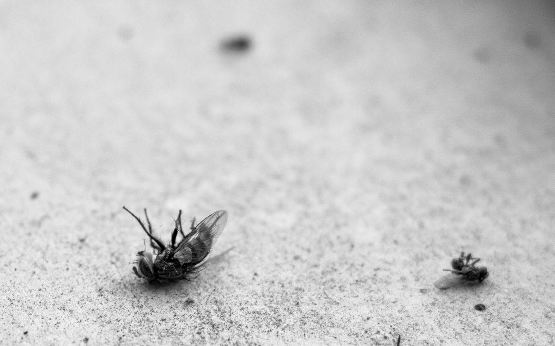 Donner une mouche à mes fourmis ?