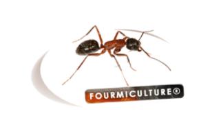 Qui est Fourmiculture ?